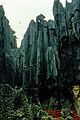 Stone forest 1983-25.jpg