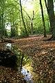 Stream in Burnham Beeches - geograph.org.uk - 1464272.jpg