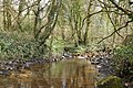 Stream near Tumble - geograph.org.uk - 1243131.jpg