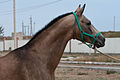 Studfarm in Turkmenistan - Flickr - Kerri-Jo (108).jpg