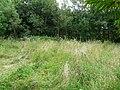 Summer Meadow - geograph.org.uk - 905576.jpg