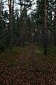 Sundbyholmsåsens naturreservat0004.jpg