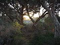 Sunlit Wetland.jpg