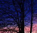Sunset (2207535756).jpg