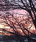 Sunset with bare trees December in New Jersey