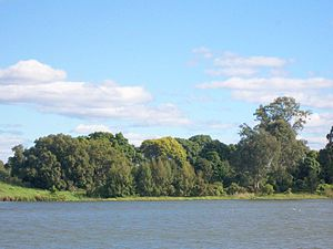 Clarence River (New South Wales) - The Clarence River, as it flows past Susan Island Nature Reserve, near Grafton.