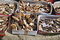 Swat valley mushroms.JPG