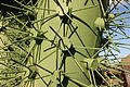 Teguise Guatiza - Jardin - sculpture 06 ies.jpg