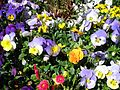 Teignmouth Blooms Again - 5 - Flickr - Sir Hectimere.jpg
