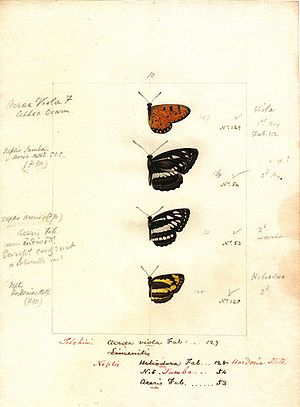 Robert Templeton - A watercolour plate by Robert Templeton illustrating Sri Lankan butterflies