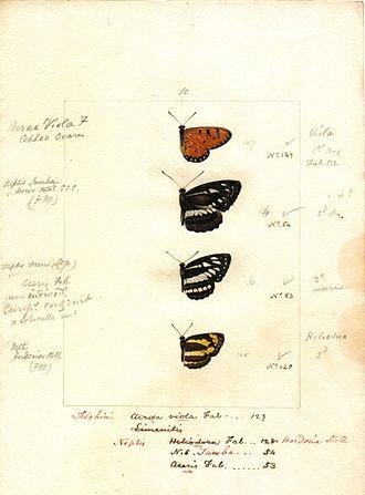 Robert Templeton - A watercolour plate by Robert Templeton illustrating Sri Lankan butterflies