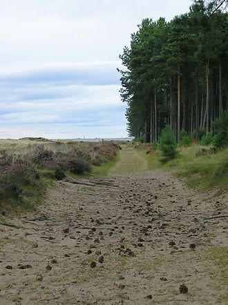 Tentsmuir Forest - Image: Tentsmuir Forest 1