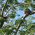 Termite-nest-Yucutan.jpg