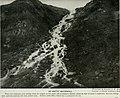 The American Museum journal (c1900-(1918)) (17974234798).jpg