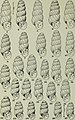 The Conchologists' exchange (1911) (20491183500).jpg