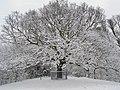The Oak of Honor under snow - geograph.org.uk - 1149024.jpg