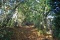 The Wealdway, Hurst Wood - geograph.org.uk - 1571775.jpg