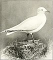 The birds of Yorkshire - being a historical account of the avi-fauna of the County (1907) (14568958607).jpg