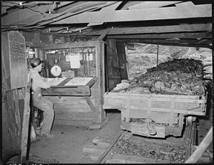 Checkweighman - A checkweighman at work at the Clover Gap Mine in Kentucky in 1946