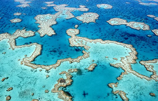 The dazzling colours of the Great Barrier Reef near Airlie Beach, Whitsunday Islands, Queensland