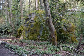 The Thornton Creek glacial erratic located southwest of 17th Ave NE and NE 104th St., in Seattle Parks' Kingfisher Natural Area Thornton Creek erratic east face.JPG