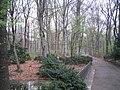TiergartenWoods.jpg