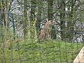 Tierpark Aachen 17.jpg