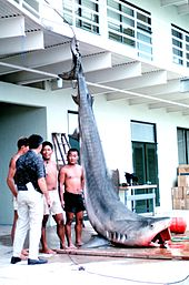 Photo of shark hung by its tail on the shore