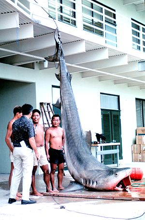14-foot, 1200 pound tiger shark caught in Kane...