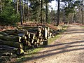 Timber stack in Milkham Inclosure, New Forest - geograph.org.uk - 328011.jpg