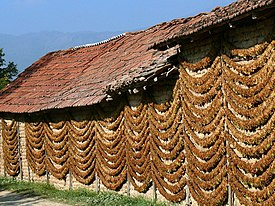 Tobacco Drying, Kostinci.jpg