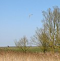 Toft Monks drainage mill - the resident owls - geograph.org.uk - 1803661.jpg