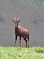 Topi Rwanda3.jpg