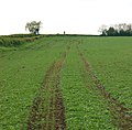 Tractor ruts in crop, Long Itchington - geograph.org.uk - 1277028.jpg