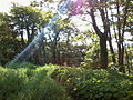Tramore Garden in spring.jpg