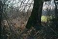 Tree (139876605).jpeg