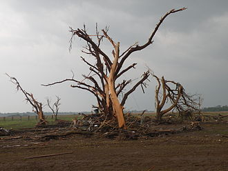 Tornado outbreak sequence of May 21–26, 2011 - Ground scouring and a debarked tree near El Reno with various debris, including a car, piled at its base.