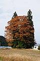 Tree of Totoro (Ver.Y) (5170544813).jpg
