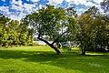 Trees Park Jacques-Cartier Gatineau (40010504695).jpg