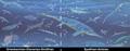Triassic marine vertebrate apex predators.png
