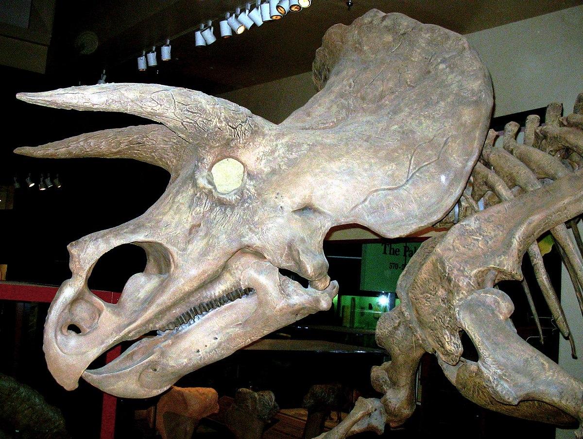 Marginocephalia - Wikipedia