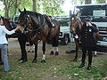 Trooping the Colour 2009 021.jpg