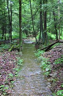 Trout Run (East Branch Fishing Creek tributary) tributary of East Branch Fishing Creek in Sullivan County, Pennsylvania