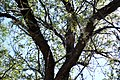 Tumacacori NHS DSC 0824 (15670022305).jpg