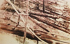 Evidence of the Tunguska event that occurred on June 30. This photo was taken years later.