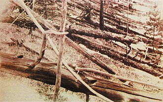 Tunguska event - Photograph from Kulik's 1929 expedition taken near the Hushmo River