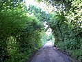 Tunnel of trees - geograph.org.uk - 830936.jpg