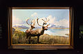 Two Grant Caribou at the American Museum of Natural History in New York City.jpg