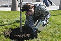 U.S. Army Sgt. 1st Class Adrian Bennett with the 364th Sustainment Command fertilizes newly-planted trees during the unit's commemoration of Earth Day in Marysville, Wash., April 22, 2013 130422-A-WJ570-363.jpg