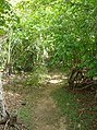 UNESCO Niokolo-Koba National Park Senegal (3686587495).jpg